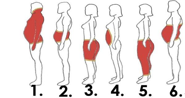 6 tipos de grasa corporal